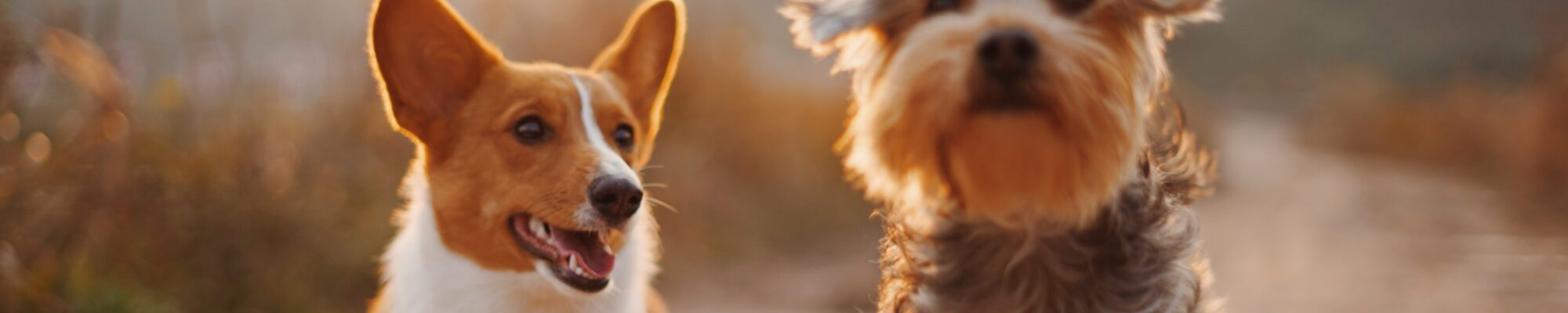 Hunddagis i Ulricehamn